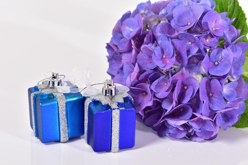 紫陽花の花とプレゼントボックス